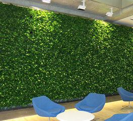 Ambius GWU Interior Green Wall