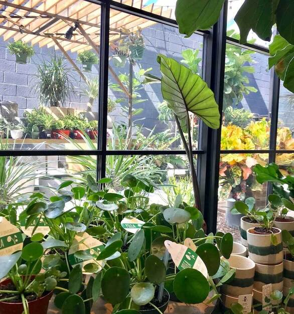2Fold's Window Wall with muntins nestled behind some foliage at the newly renovated Bespoke Home & Garden store.