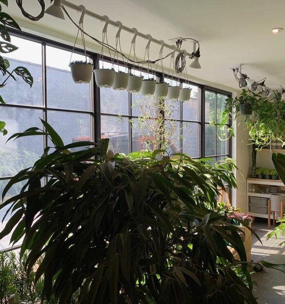 Green foliage covers a room where 2Fold installed a version of their Window Wall containing 3 Fixed window units and 1 Out-Swing door, all with vertical and Horizontal muntin grids.
