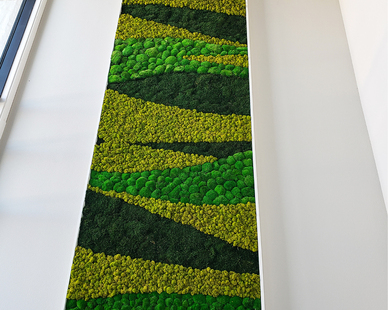 A 12' tall preserved moss panel in a custom frame set as a back drop to a reception area as well as an acoustic panel.