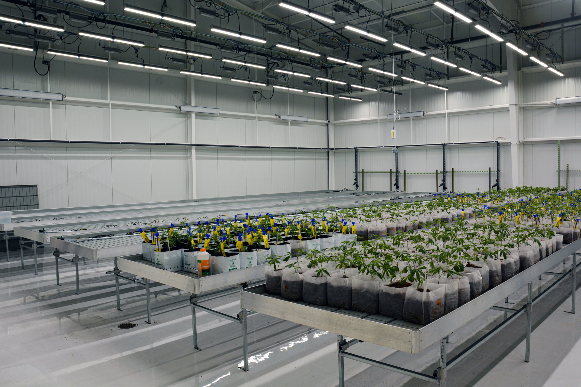 Uniquely positioned as the first farm-grown and biodynamically raised cannabis on the East Coast, Theory Wellness uses a sustainable business model focused on soil topography, environmental stewardship, and regenerative processes.