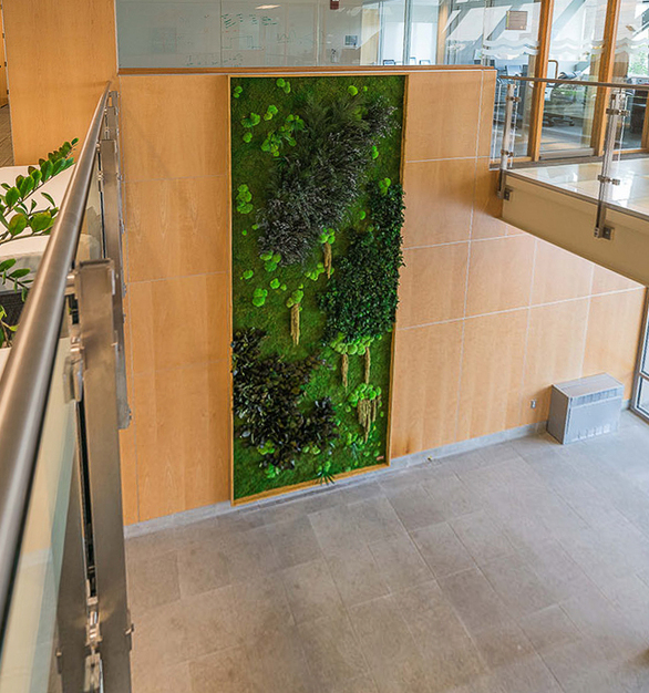 Incorporate a garden wall to your interior spaces. This application features Eucalyptus, Forest, Ferns, and Flower Foliage species over a Flat Moss canvas on a multi-panel installation.