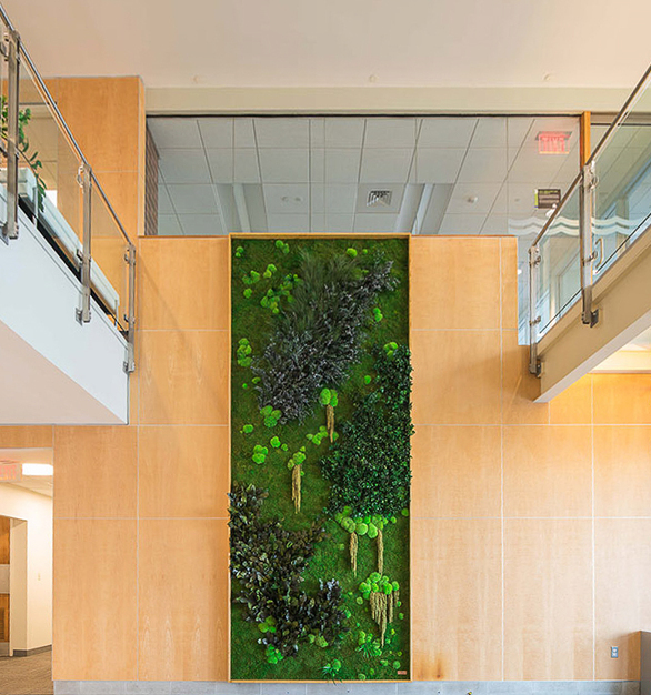 A Eucalyptus, Forest, Ferns, and Flower Foliage species over a Flat Moss canvas garden wall install 100 Fith Avenue CityPoint.