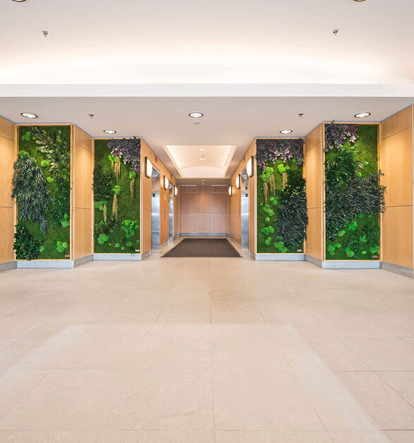 Give a facelift to your interiors with a multi-panel Eucalyptus, Forest, Ferns,  and Flower Foliage species over a Flat Moss canvas garden wall. These preserved plants make a great complement to your interior office designs.