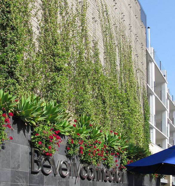 The parking structure at the Beverly Connection in Beverly Hills, CA is camouflaged with a greenscreen green wall and potential heat gain is mitigated. Modular panels are wall mounted and a variety of vines grow from the above grade planters.