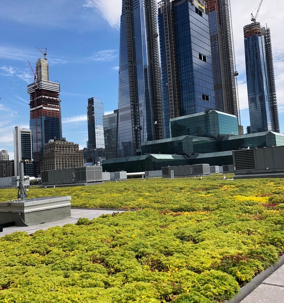 Javits Convention Center green roof gives this building a unique touch, by Chatfield Green Roofing.