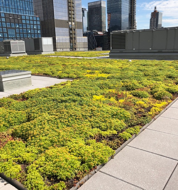 Chatfield Green Roofing provided the unique and stylish green roof at Javits Convention Center.
