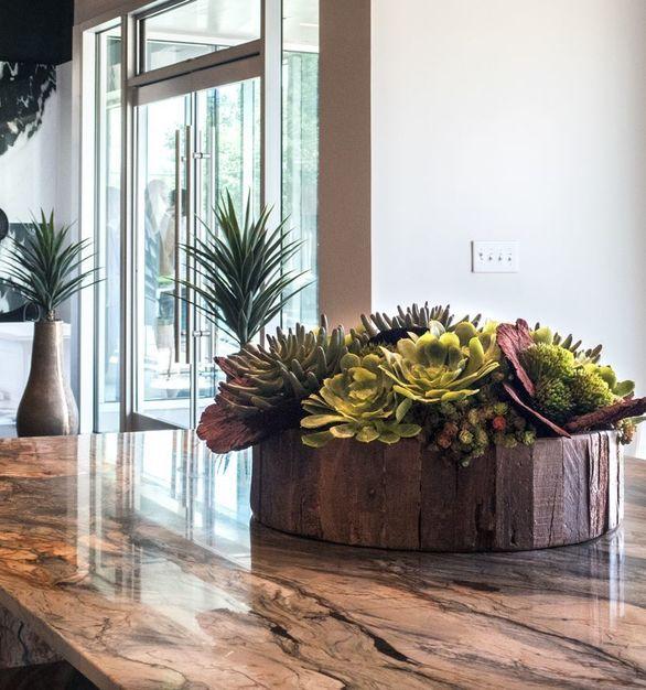 Custom succulent arrangement featured in a retail showroom.