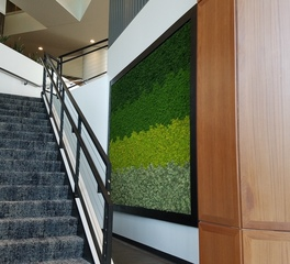 mccaren designs office space moss wall