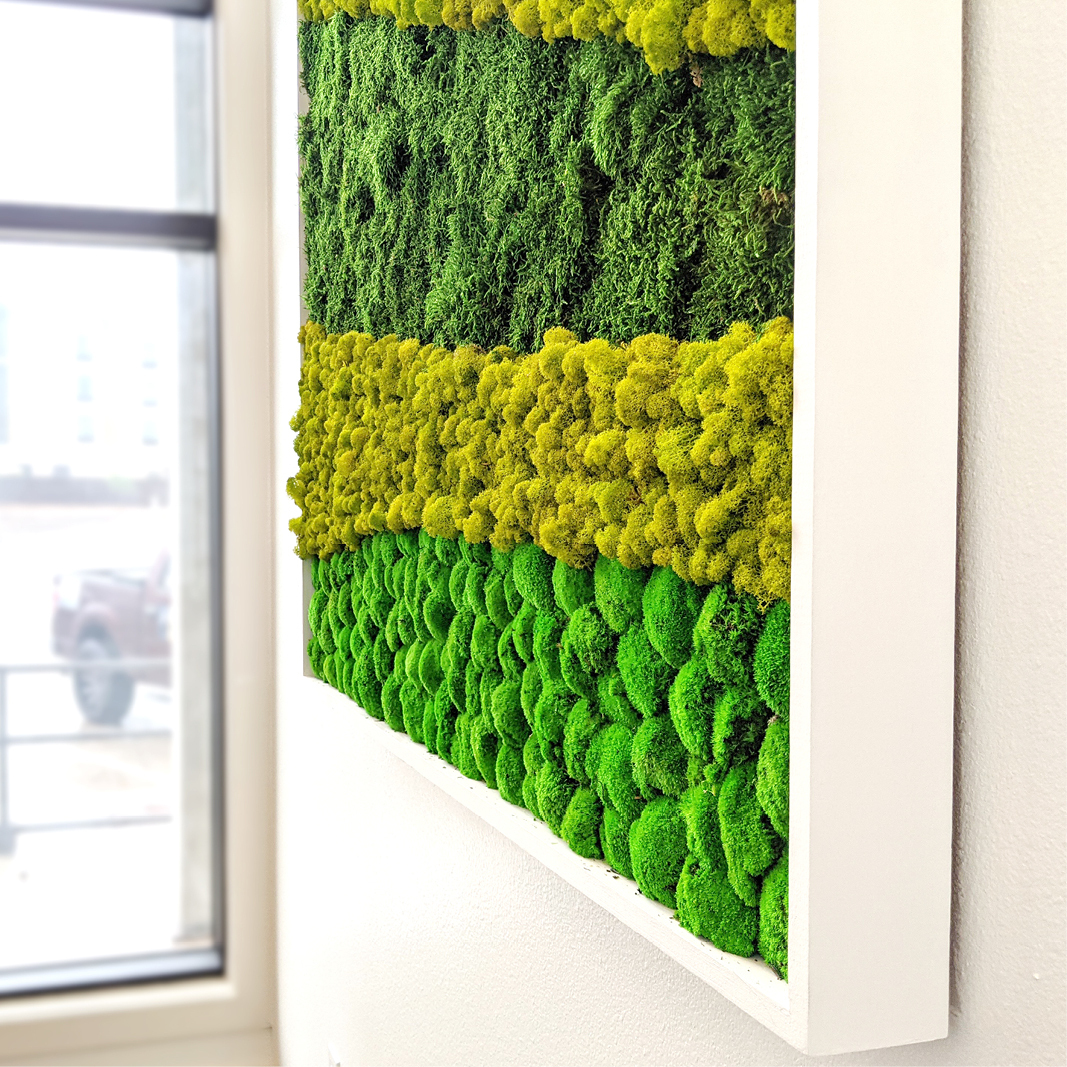 Texture closeup of a 12' Moss wall in a custom frame. Three types of moss, Pole, Flat and Reindeer moss were used to make this striking installation. No Water. No Sunlight.