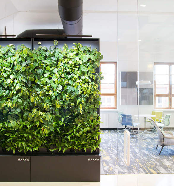Naava offers smart and active green walls with a wide set of features, including lush living plants, effortless maintenance, optimized air humidity, and air biofiltration.