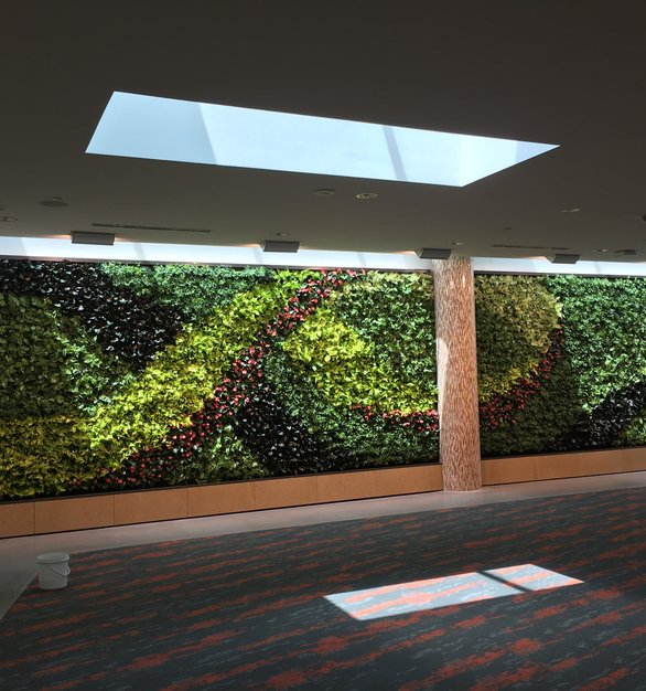 Green Living Wall installation by Natura at the Toyota North America HQ in Plano, Texas.
