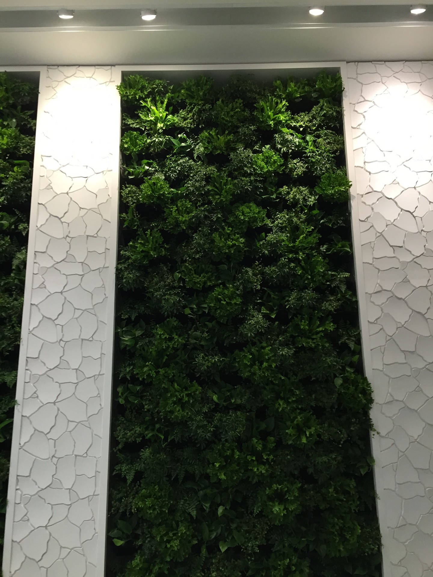 Planted walls, by Natura can make a building more energy-efficient by providing a shield from strong summer sunlight and provide protective insulation during the winter months.