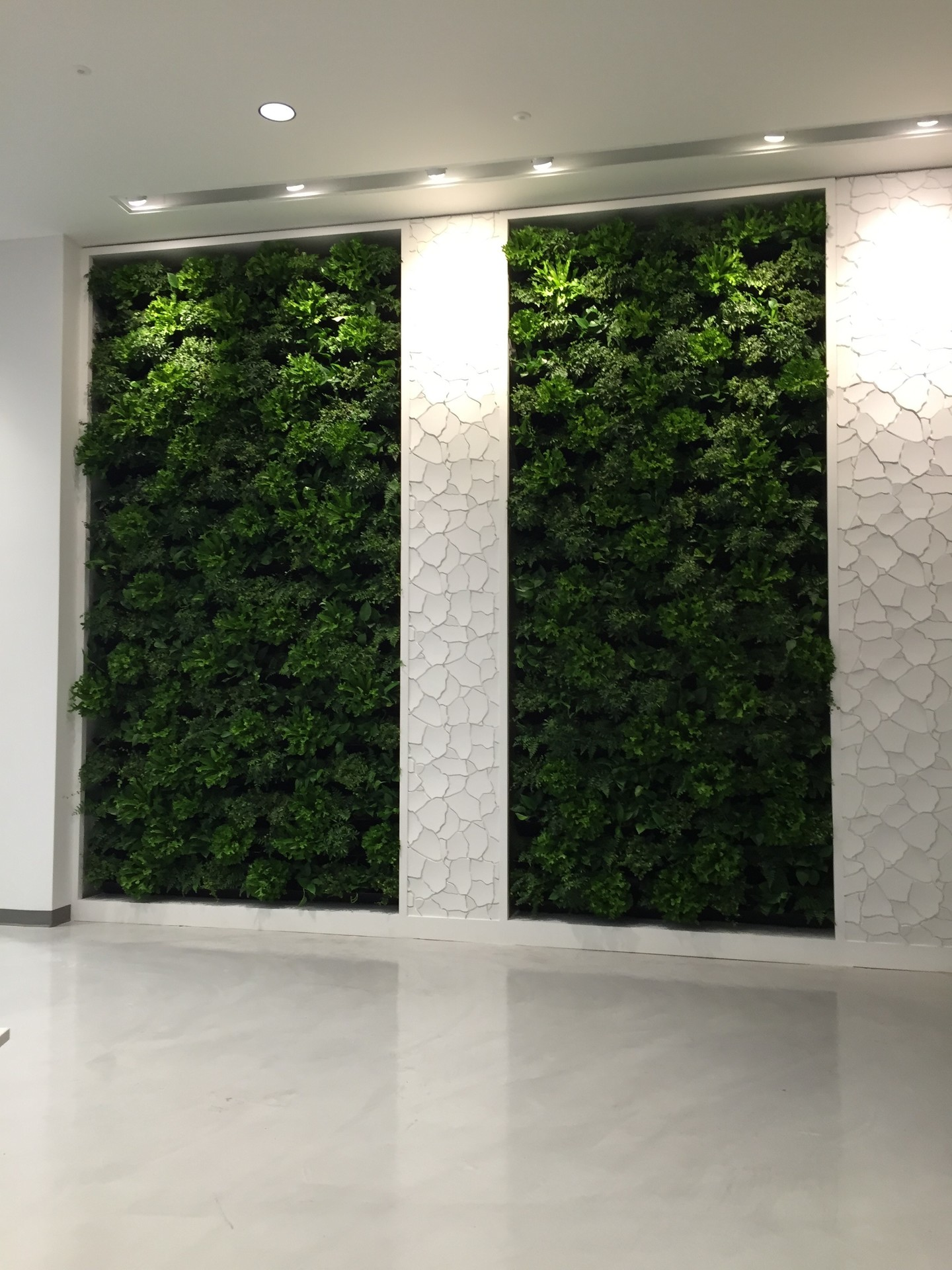 Natura's beautiful indoor green wall system is the perfect addition to any office space.