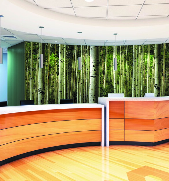 This reception area has a tree wall graphic to create a serene environment.